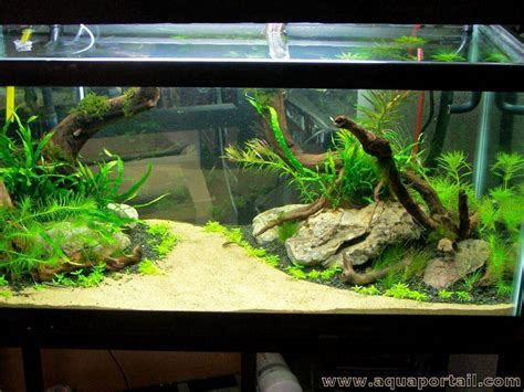 aquarium eau douce d 233 finition