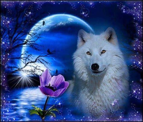 corbeau bureau manifique loup blanc dans la nuit loup blanc