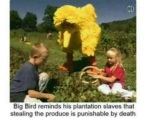 Big Bird Memes - 535 best dank memes images on pinterest