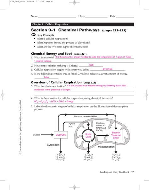section 9 1 chemical pathways holyoke