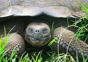 This Flipped Over Giant Tortoise Gets By With A Little