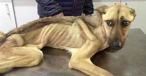 Starving Dog Who Couldn't Stand Up Makes An Incredible ...