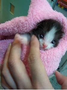 15 very cute baby cat pics - Cutest Cats
