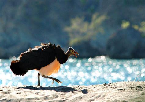 Nah, disini anda bisa melihat langsung gambar burung yang populer di sosial. Burung Langka di Raja Ampat Papua | THE MANSINAM