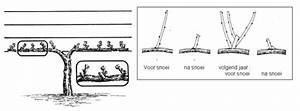 Weinreben Schneiden 1 Jahr : r ckschnitt bei weinreben und kiwi ~ Lizthompson.info Haus und Dekorationen