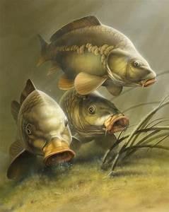 c3343385dafaa74b6acecb7a90d4e0ab.jpg (571×720) | cá chép ...