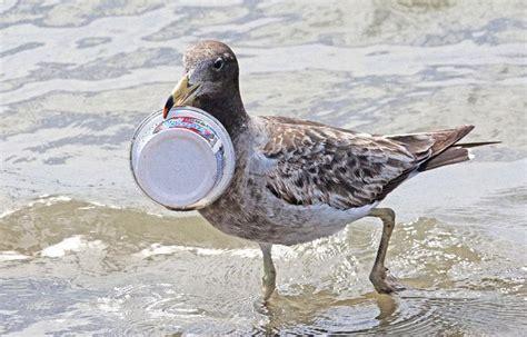 si鑒e de l onu l onu lance une cagne mondiale pour lutter contre la pollution plastique