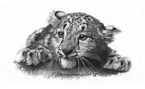 Cute Snow Leopard Cub Drawings