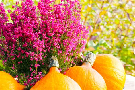 Tipps Für Den Garten Im Herbst by Tipps F 252 R Bl 252 Tenpracht Im Garten Bis In Den Herbst