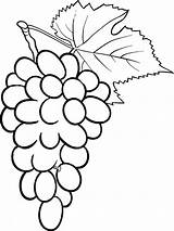 Grapes Coloring Pages Clipart Fruits Grape Fruit Drawing Vector Illustration Printable Clip Pencil Blueberry Recommended Getdrawings Clipartmag sketch template