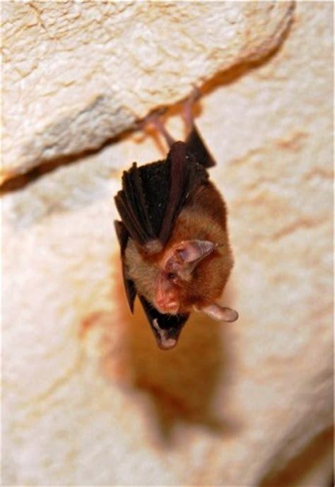 bumble bee bat beekeeping