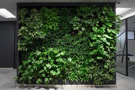Pflanzen An Wand by Ma And Nh Living Plant Wall Design And Maintenance