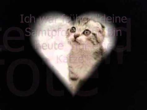 traurige geschichte einer katze