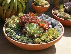 plantes pour jardinieres peu gourmandes en arrosage With idee decoration jardin exterieur 11 cactus entretien arrossage et rempotage
