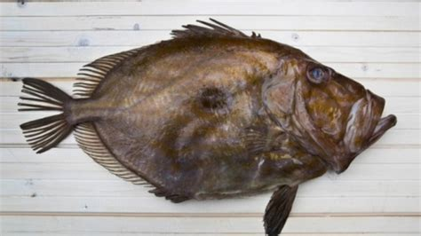 cuisiner poisson recette pour cuisiner le conseils de