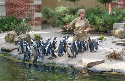 How to Become a Zoologist or Wildlife Biologist in Texas