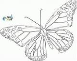 Butterfly Coloring Monarch Pages Printable Template Blank Colouring Drawings Outline Drawing Advanced Colorful Butterflies Azcoloring Sheets Tattoo Simple Cliparts Printables sketch template