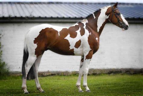 horse expensive most breeds list paint horses quarter western luxurious