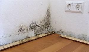 Wände Trocknen Nach Wasserschaden : m ndliche schimmelgutachten preisg nstig und schnell ~ Michelbontemps.com Haus und Dekorationen