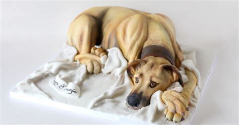 animal rights activists troll baker   lifelike