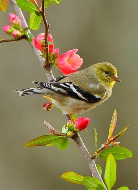 beautiful love birds wallpapers