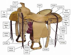 Horse And Saddle Diagrams