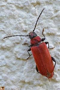 Insecte Qui Mange Le Bois : voila un insecte qui sort du bois de chauffage le ~ Farleysfitness.com Idées de Décoration