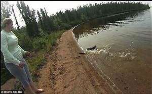 Watch out! The moment a pike dashes onto sand to escape ...