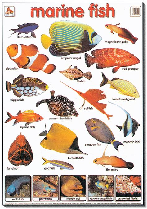 poster marine fish mighty minds
