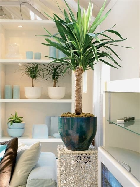 a guide to indoor trees the joy of plants