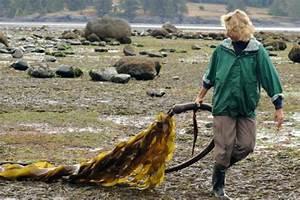 Seaweed Lady Transcript Of Interview  3  14  05   Sooke