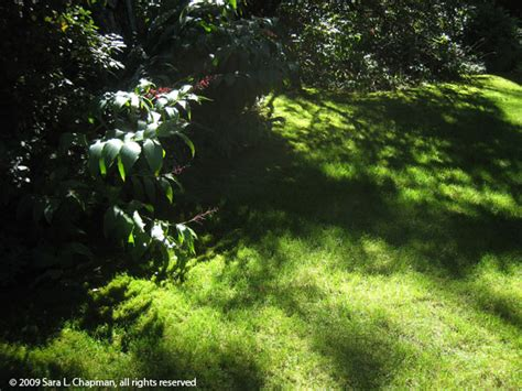 garden of shadows the garden of shadows 1916 tv shows luxrutor