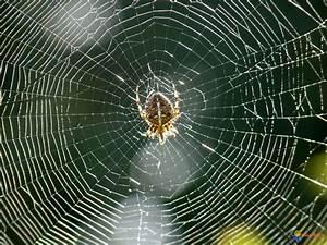 Se Débarrasser Des Araignées : comment fait l 39 araign e pour ne pas se coller sa toile ~ Louise-bijoux.com Idées de Décoration