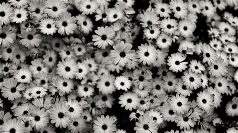 black and white aesthetic laptop wallpapers