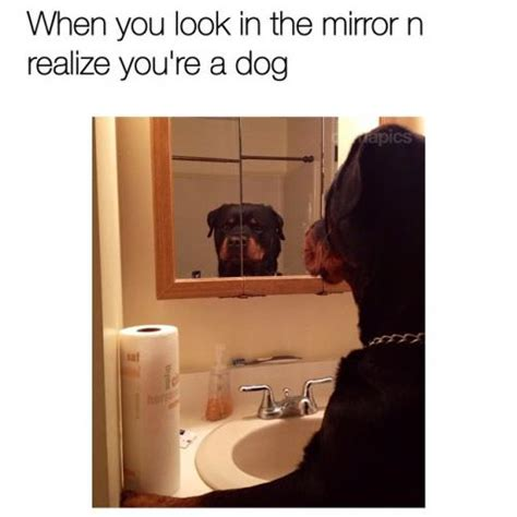 Looking In The Mirror Meme - when you look in the mirror n realize you re a dog