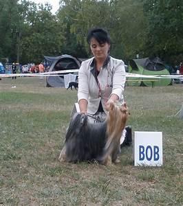 Droguerie De L Eden : chien elevage de l 39 eden argente eleveur de chiens ~ Dailycaller-alerts.com Idées de Décoration
