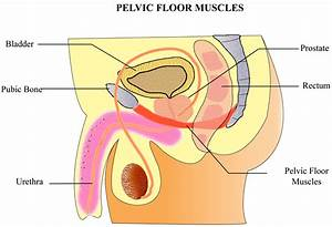 floor pelvic floor exercises for men design on gym ball With pelvic floor exercises prostate