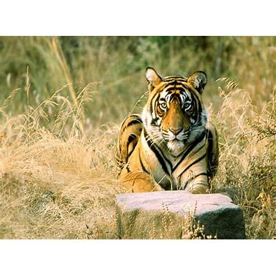 Ranthambore National Park: A Wildlife Travel Guide