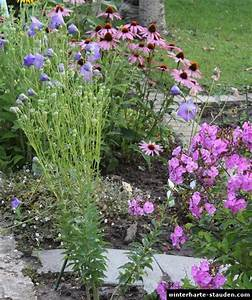 Winterharte Pflanzen Liste : winterharte stauden im garten ~ Michelbontemps.com Haus und Dekorationen