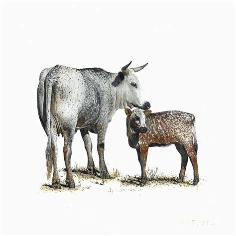 nguni   calf  painting  edgar pretorius