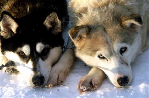 cuisine plus recrutement les plus beaux chiens de l 39 internaute