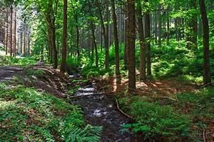 Bilder Vom Wald : der rodebach sommer am bachlauf im th ringer wald foto bild deutschland europe th ringen ~ Yasmunasinghe.com Haus und Dekorationen