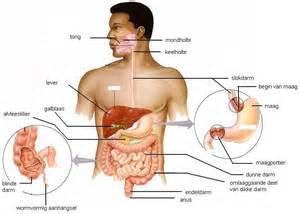 Oorzaak van pijn in de middenrug Weg met rugpijn