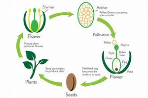 Chapter 38 - Plant Reproduction