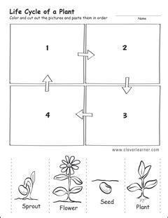 life cycle worksheets  preschools
