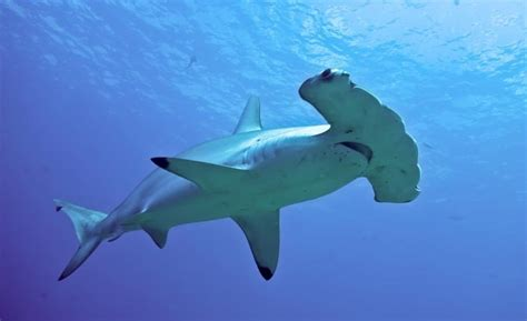 15 Interesting Facts About Sharks You May Not Know - Page 4 of 5