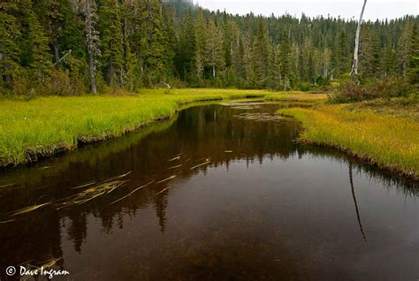 moody murray meadows