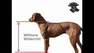 Dog Withers Diagram