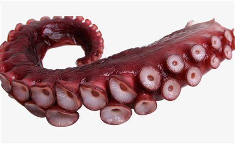 cuisiner tentacules de poulpe poulpes ou pieuvres tentacules la pieuvre du pied couper