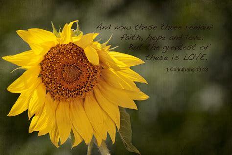 sunflower bible quotes quotesgram